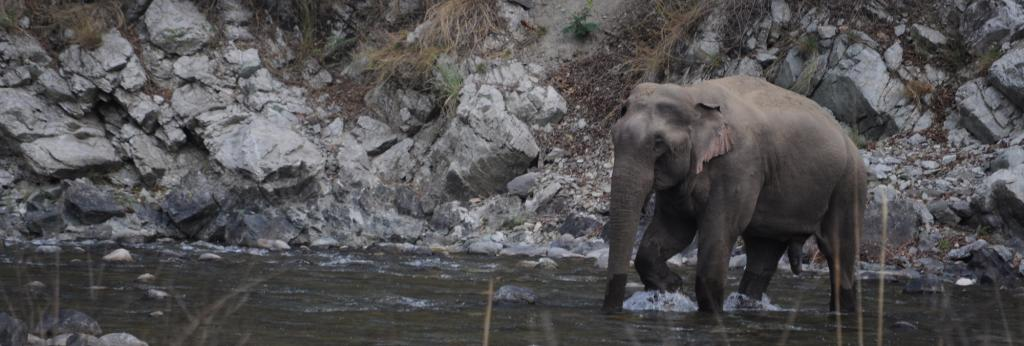 The aim is moved at conservation of elephants. Photo: Shayantan Vera