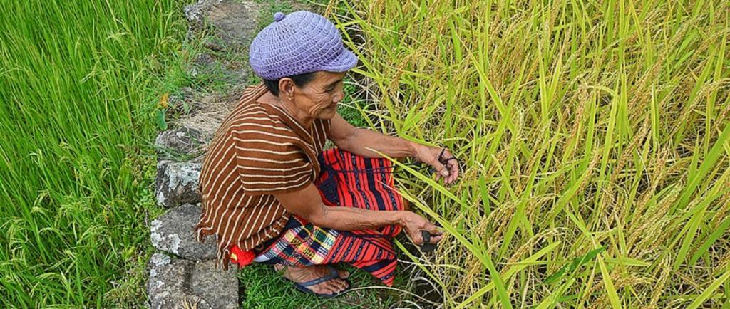 Organic farming. Source: Wikimedia commons