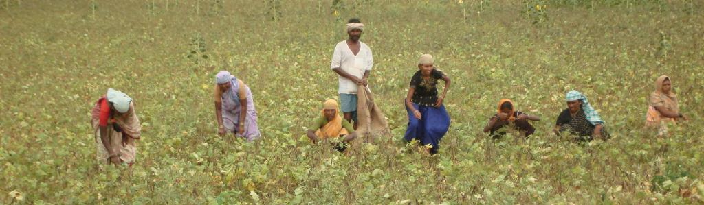 Pradhan Mantri Fasal Bima Yojana made voluntary for farmers. Source: Wikimedia Commons