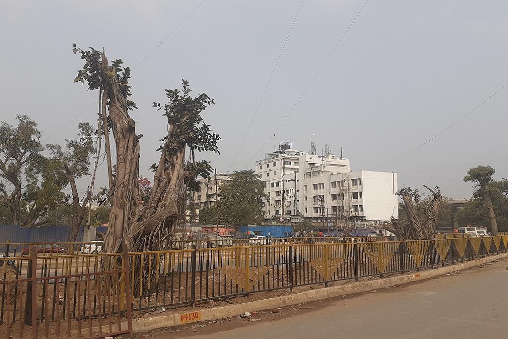 पटना में नव निर्मित आर ब्लॉक-दीघा रोड के किनारे ट्रांसलोकेट किये गए पेड़ सूख रहे हैं। फोटो: पुष्यमित्र