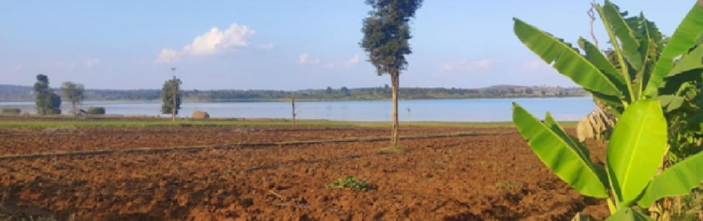 HD Kotte farming. Photo: Nimitt Dixit