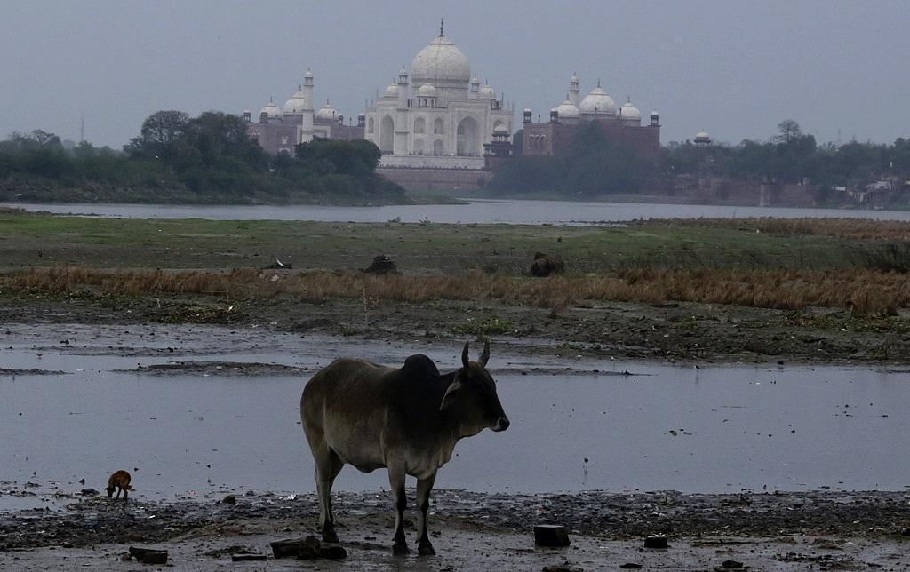 आम दिनों में ऐसे दिखती है ताज महल के पास से गुजर रही यमुना। फाइल फोटो: विकास चौधरी