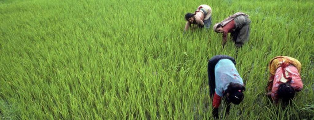 Farmers in Nepal. Source: Flickr