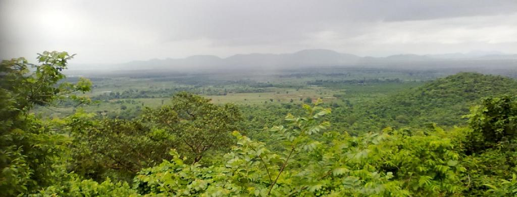 Odisha forests. Source: Wikipedia