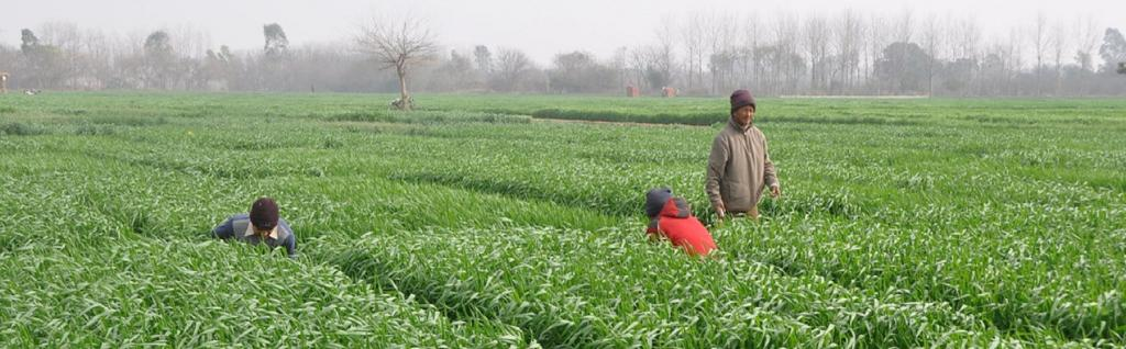 Farms in Ludhiana. Source: Flickr
