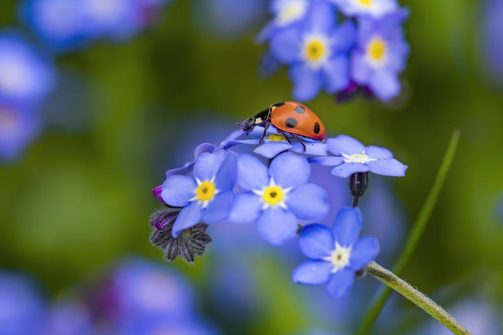 A ladybird. Weaving insect wildlife back into the tapestry of life. Photo: Getty Images