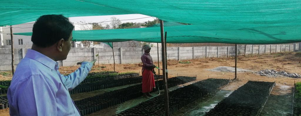 A nursery set up in Muttangi village of Sangareddy district using MGNREGA funds. Afforestation is one of the interventions under JSA. Photo: Akshit Sangomla