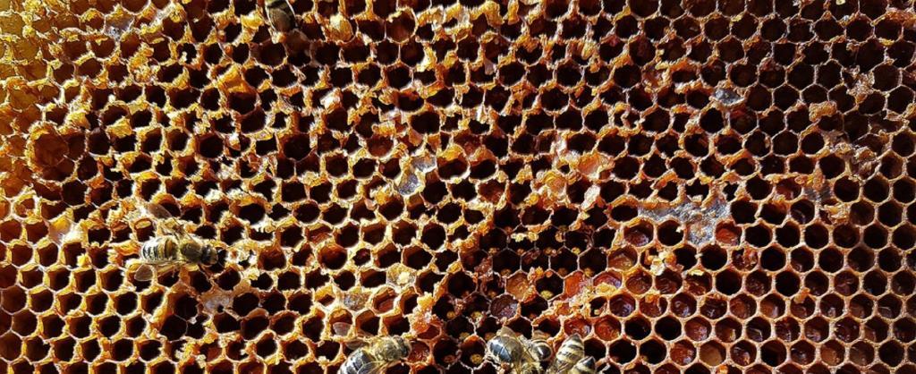 Honeycomb. Source: pixabay
