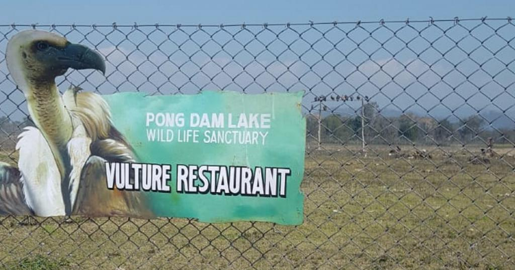 The 'Vulture Restaurant' is operated by Himachal Pradesh's forest department Photo: Rohit Prashar