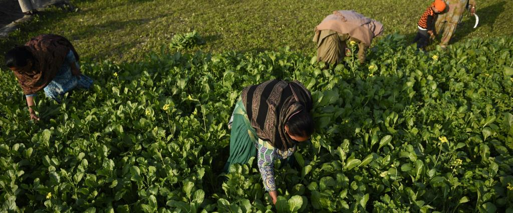 Women labourers in Punjab. Credit: Adithyan PC