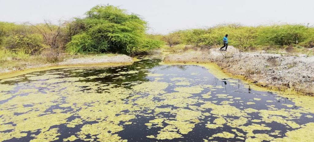 Dug out pond on community lands of Avulavandlapalli village of Sambepalli mandal, Kadapa district, AP. Photo: G Ram Mohan