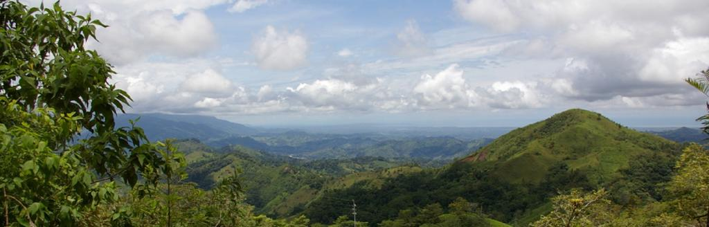 A new study on carbon sequestration focussed on 15 undisturbed, lowland tropical forests located in southwestern Costa Rica Photo: Wikimedia Commons