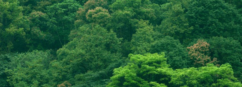 Forests of Sikkim, India. Source: Wikimedia Commons