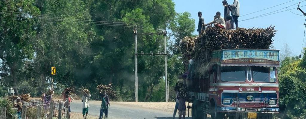 Labourers loading harvested sugarcane on a truck in South Gujarat. Photo: Rajeev Khanna