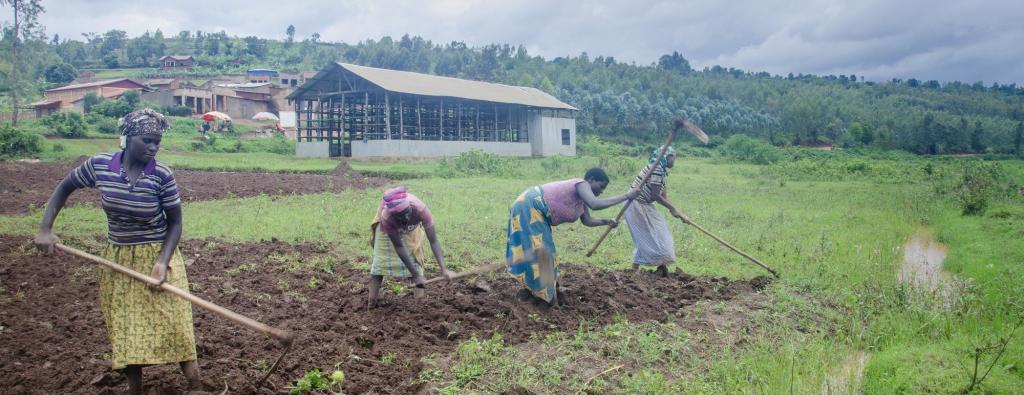 Women farming in Rwanda. Agriculture has been affected by the COVID-19 pandemic in East Africa. Photo: Christophe Hitayezu