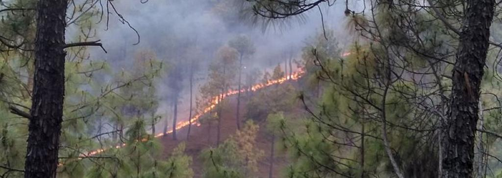 Forest fire in Uttrakhand's Almohra district. Source: Wikipedia
