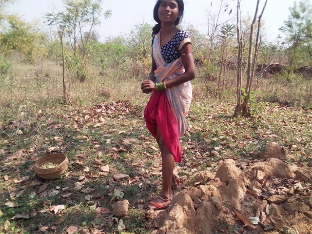 A tribal villager returns after finishing her task of picking mahua for the day. Another source of sustenance for villagers who do not practice farming, is working as manual labourers under the Mahatma Gandhi National Rural Employment Generation Act (MGNREGA). Photo: Avdhesh Mallick