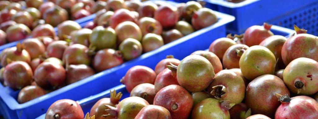 Fruit growers also faced depleting supplies of fertilisers, pesticides, micronutrients and fungicides Photo: Wikimedia Commons