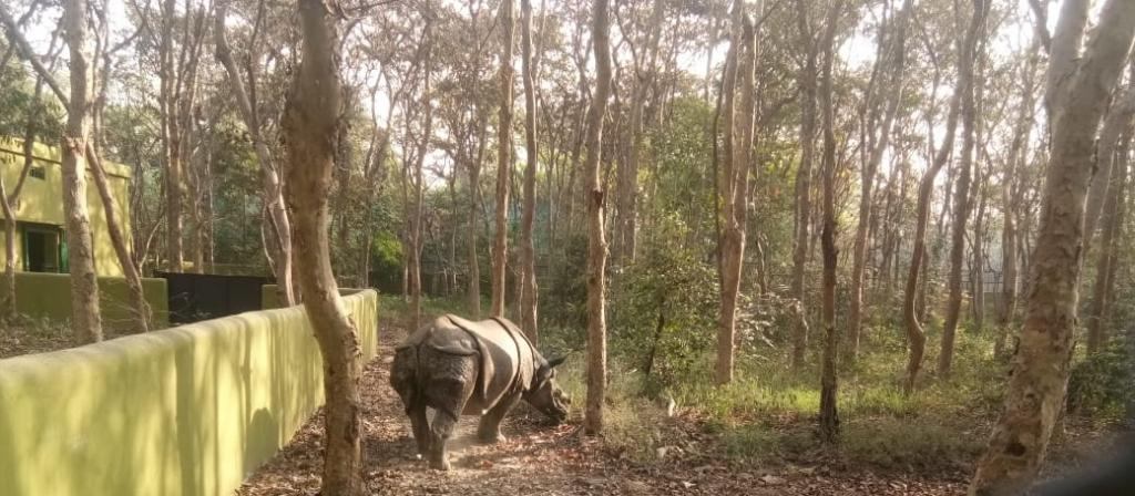 The rhino breeding centre is spread over an area of 2.5 acres of land between the new lake and the jungle trail area, according to the Patna Zoo director, Amit Kumar. Its foundation stone was laid in 2017. It can accommodate nearly 20 rhinoceroses. The zoo currently has 11 rhinos including 6 females and 5 males. Photo: Mohd Imran Khan