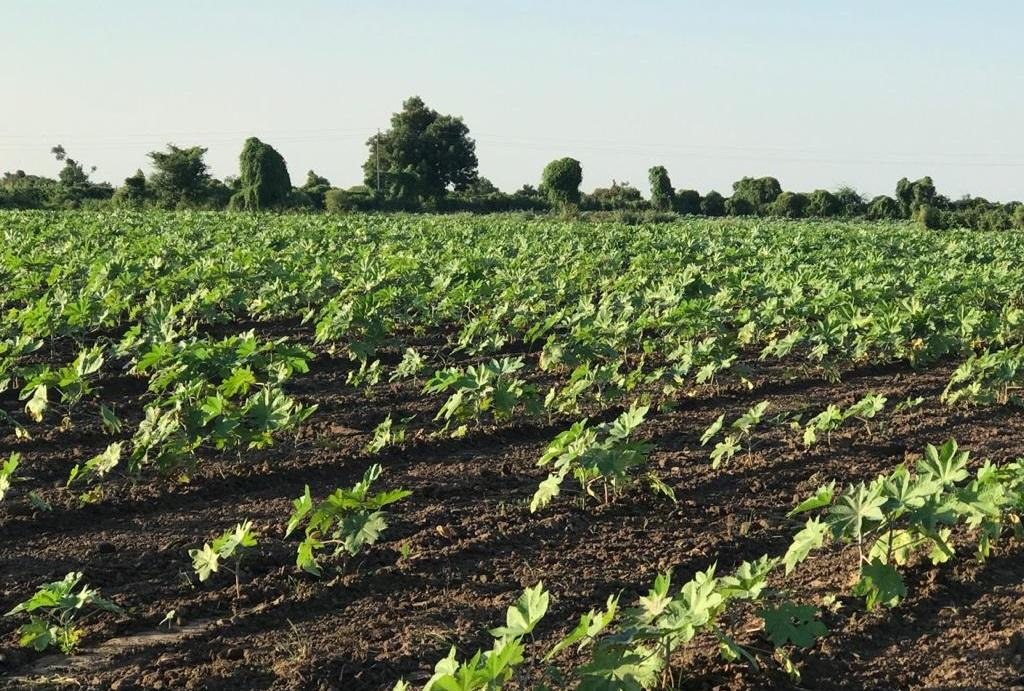 लॉकडाउन ग्रामीण अर्थव्यवस्था: निर्यात बंद होने से गुजरात के किसानों की रीढ़ टूटी