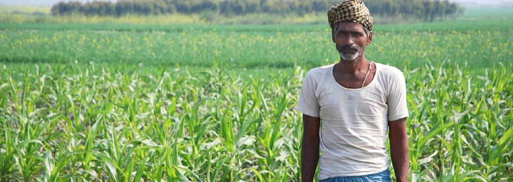 A farmer in maize field in Bihar. Source: Flickr