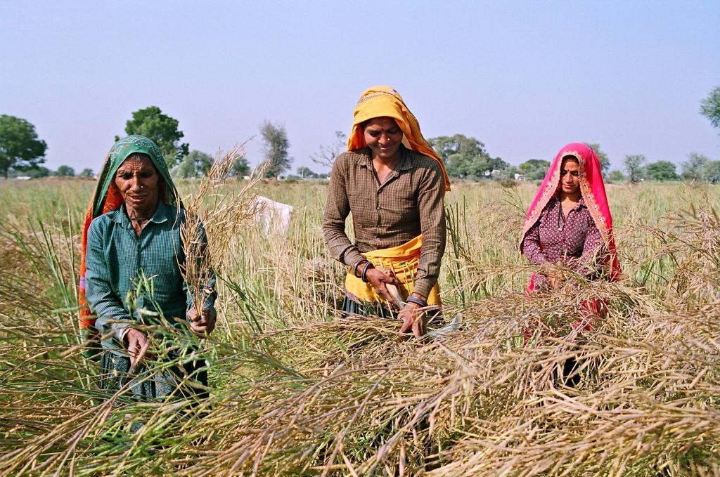 Gender gap in labour market stagnant since 1995, flags UN report