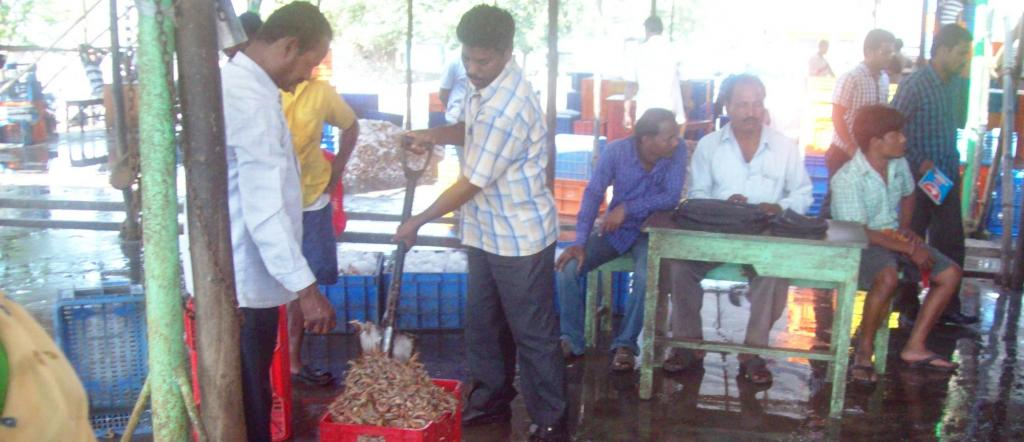 COVID-19: Odisha govt bans fish trade with West Bengal