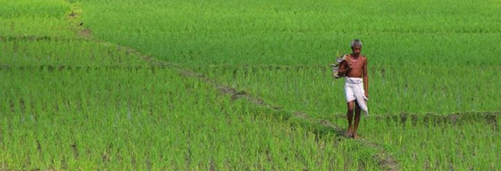 At a rice field in Bihar. Source: Flickr