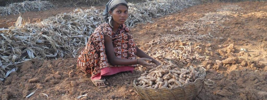 COVID-19: More than 40,000 turmeric farmers in Odisha's Kandhamal bear lockdown brunt