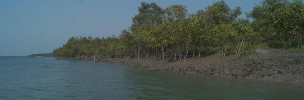 The Sundarbans span over 4,000 square kilometres and consist of 102 islands Photo: Gurvinder Singh