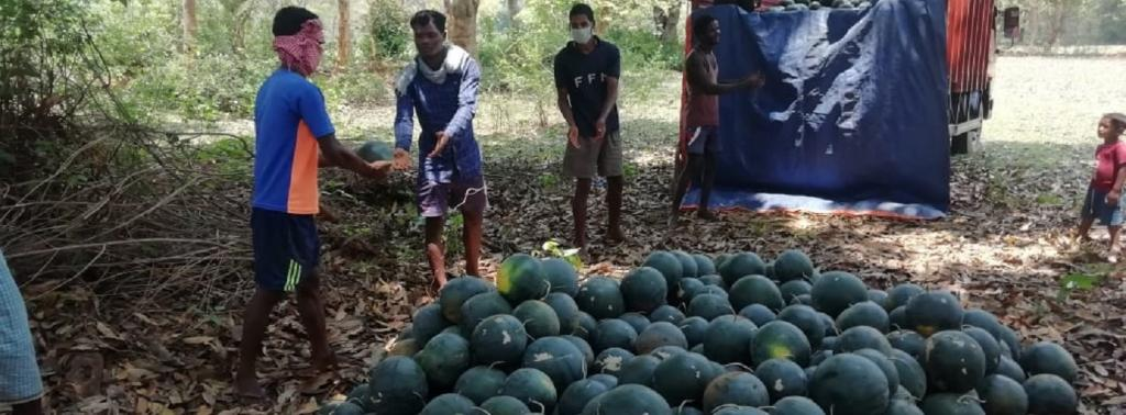 About 200 farmers in Jharkhand's Gumla district have cultivated watermelons using solar lift irrigation. Source: PRADAN