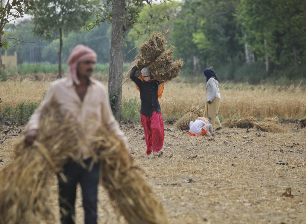 The mandi system will eventually collapse: Rakesh Tikait on new farm laws