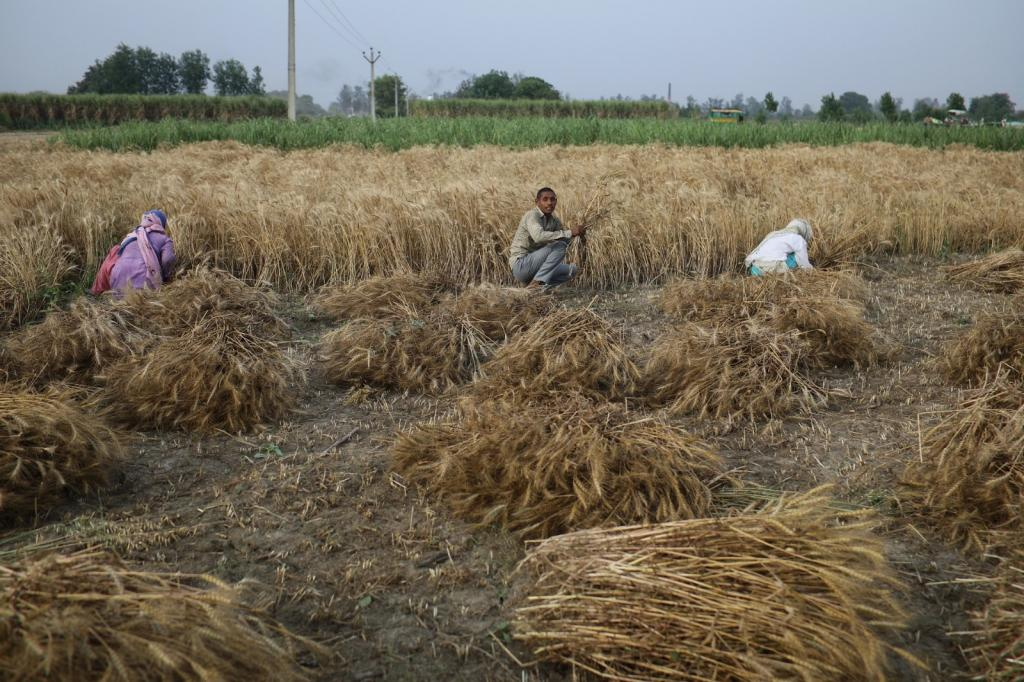 The three new agricultural laws passed by Indian Parliament in September 2020 have faced widespread opposition. Photo: Vikas Choudhary