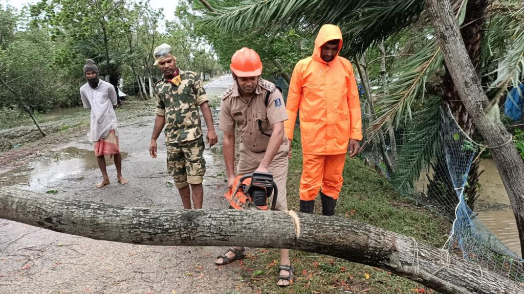 Trees uprooted in cyclone in Odisha. Source: Ashis Senapati