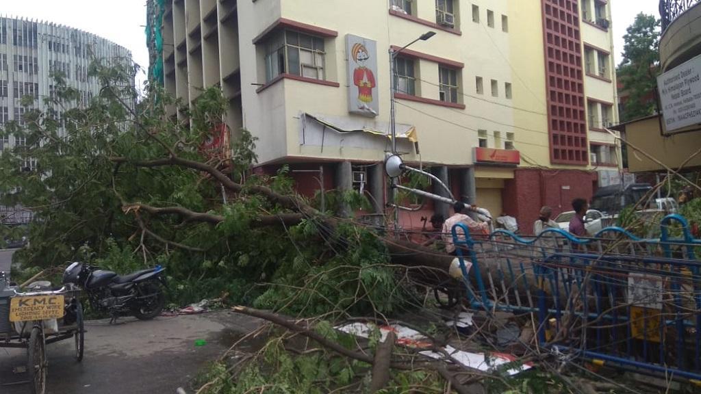 अंफान चक्रवाती तूफान की वजह से कोलकाता में बड़े-बड़े पेड़ उखड़ गए। फोटो: उमेश कुमार राय