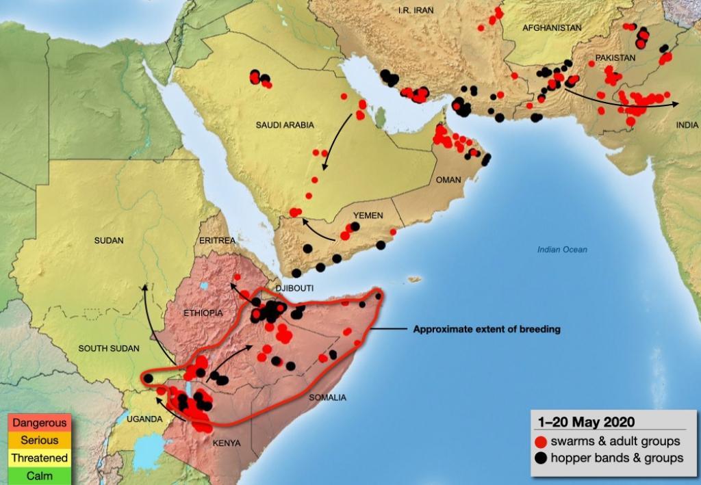 The FAO's locust update between May 1-20. Source: FAO