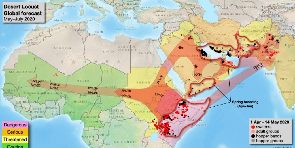 The FAO's forecast for desert locusts till July. Photo: FAO