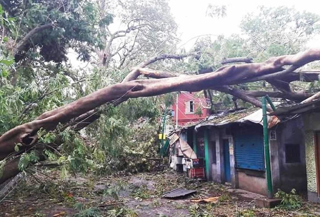 अंफान चक्रवात की वजह से सागर द्वीप में गिरा पेड़। फोटो: उमेश कुमार राय