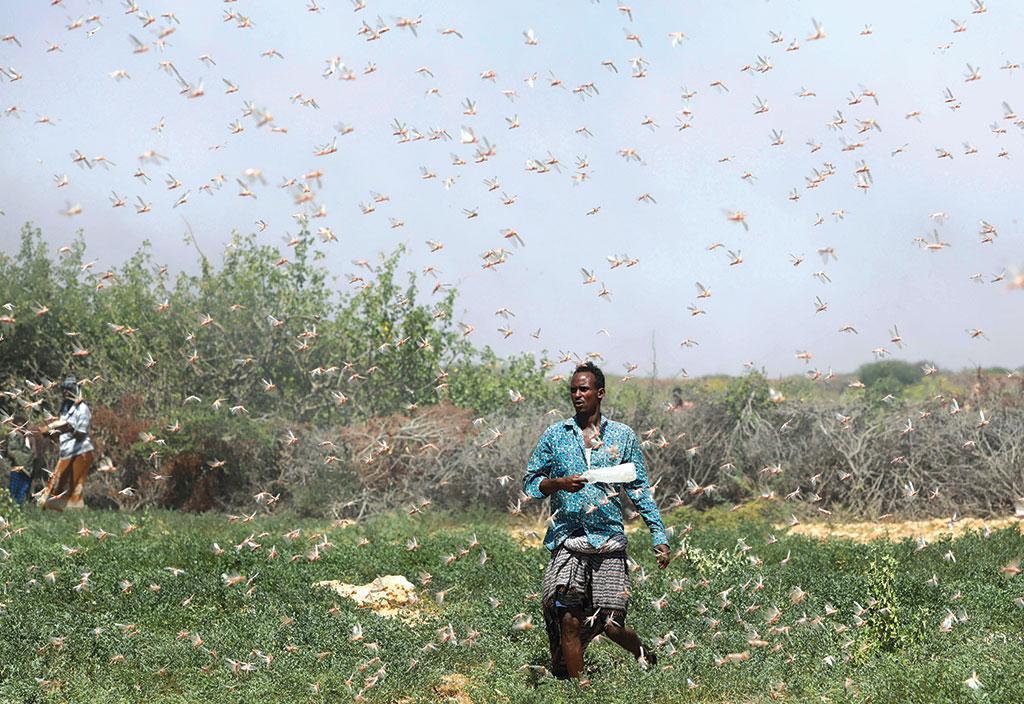 सोमालिया के एक इलाके में खेतों से टिड्डियों को भगाने की कोशिश करता एक किसान। फाेटो: रायटर्स