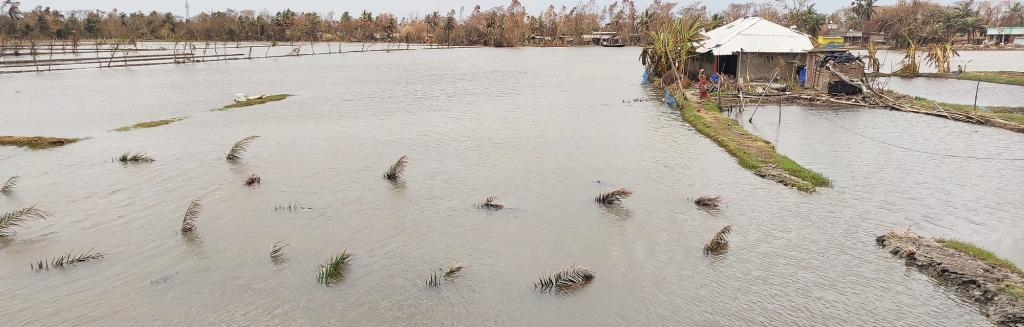 Agricultural fields submerged in the aftermath of cyclone Amphan, in Sundarbans. Photo: Gurvinder Singh