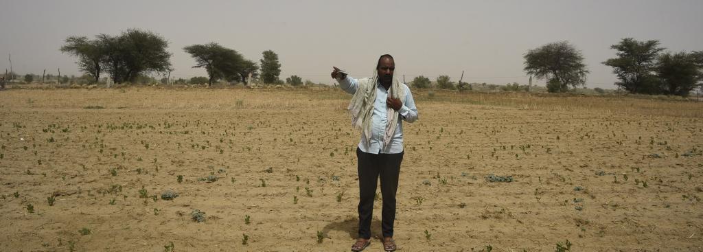 It took locusts just two hours to devour Bikaner farmer Rajkumar Jhakad's cotton crops. Photo: Adithyan PC