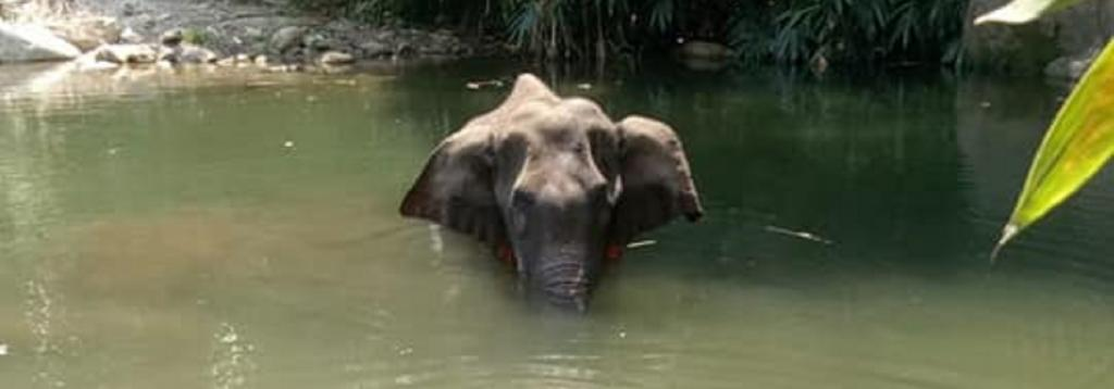 The incident where a pregnant elephant in Kerala died has serious implications for environment and wildlife Photo: Mohan Krishnan / Facebook