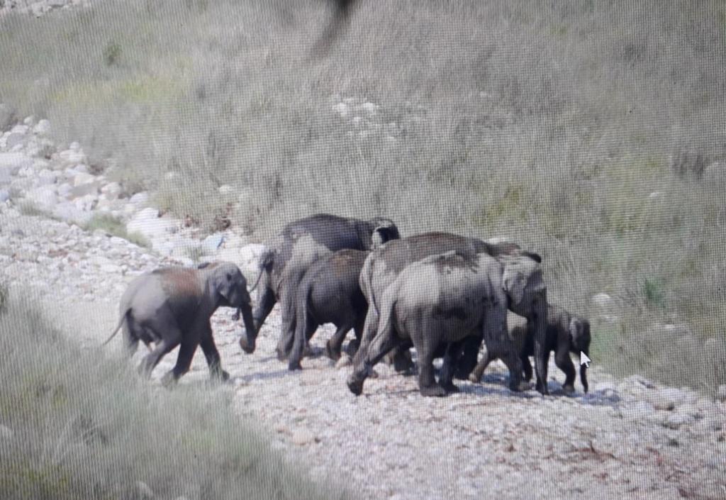 उत्तराखंड के तराई वृत्त में हाथियों का काफिला। फोटो: वर्षा सिंह