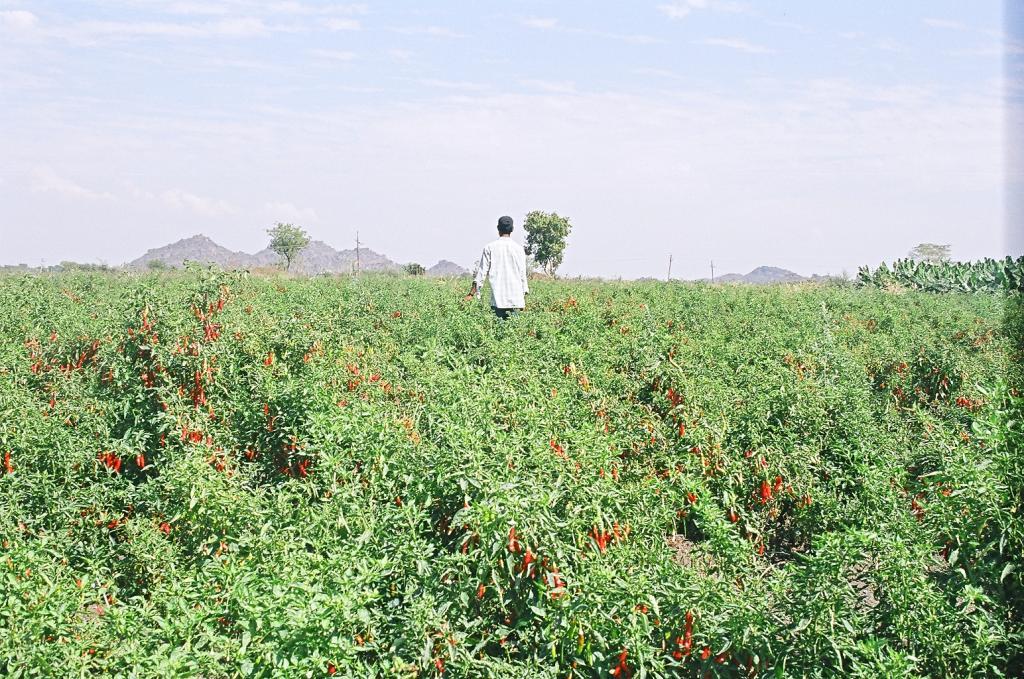Organic farming in India: On a tardy trail. Photo: Sopan Joshi