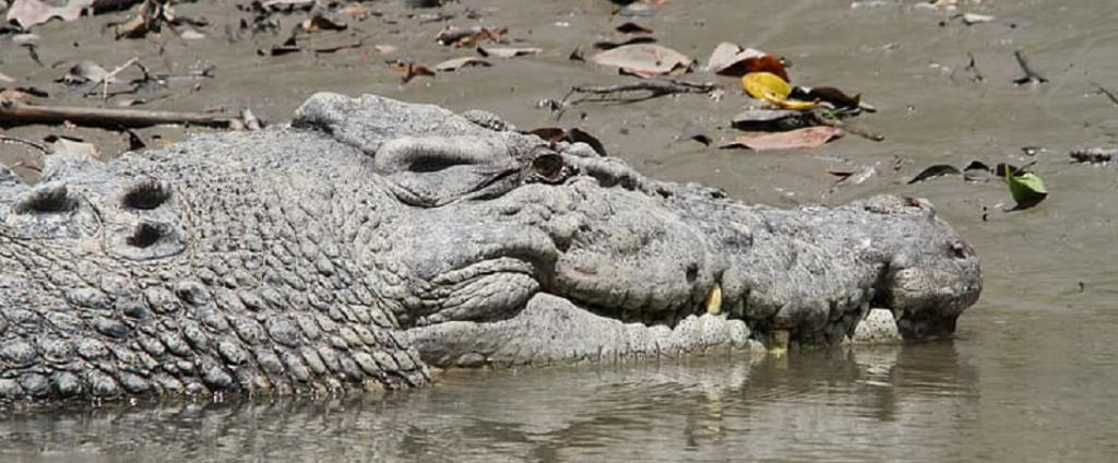 June 17 is World Crocodile Day. Photo: https://www.pikrepo.com/