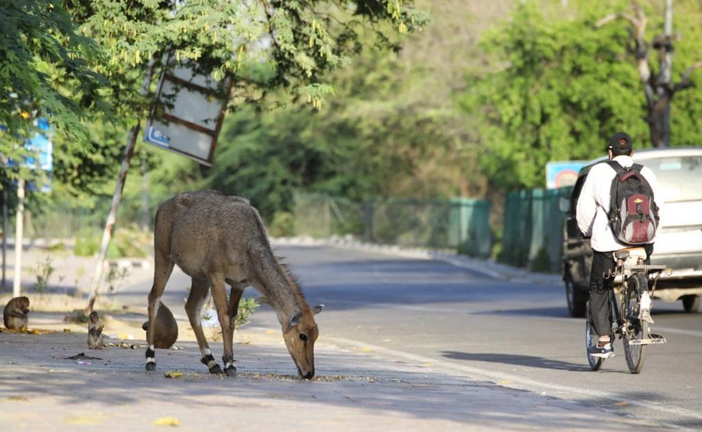 लॉकडाउन में कैसे बदला जानवरों का व्यवहार, पता लग रहे हैं रिसर्चर्स