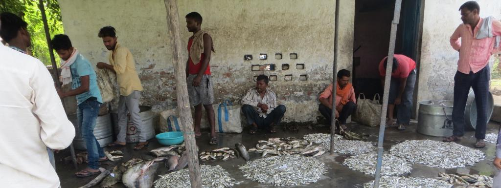 A fish mandi in Narora, Uttar Pradesh. Photo: Subhojit Goswami