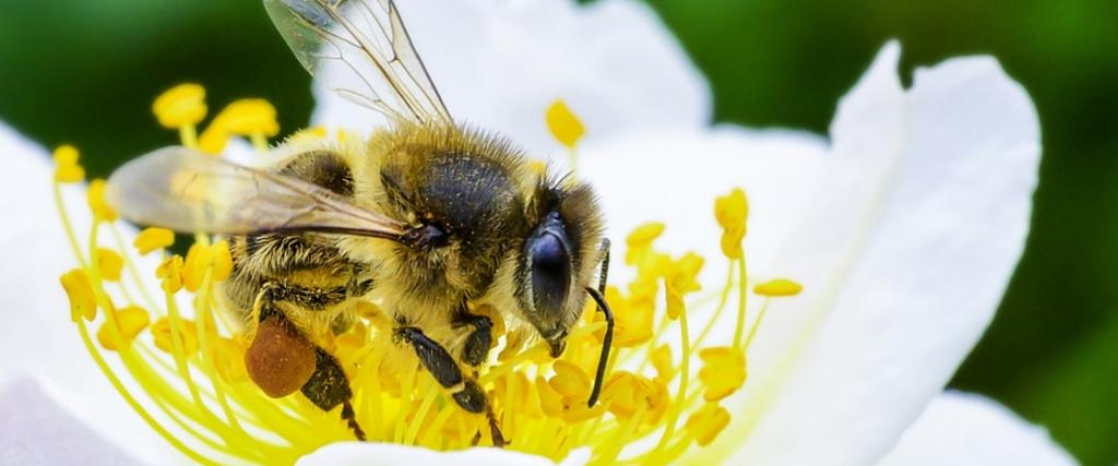 Nearly 168 bees died every day due to poor waste management, according to a 2014 study Photo: FAO / Greg Beals