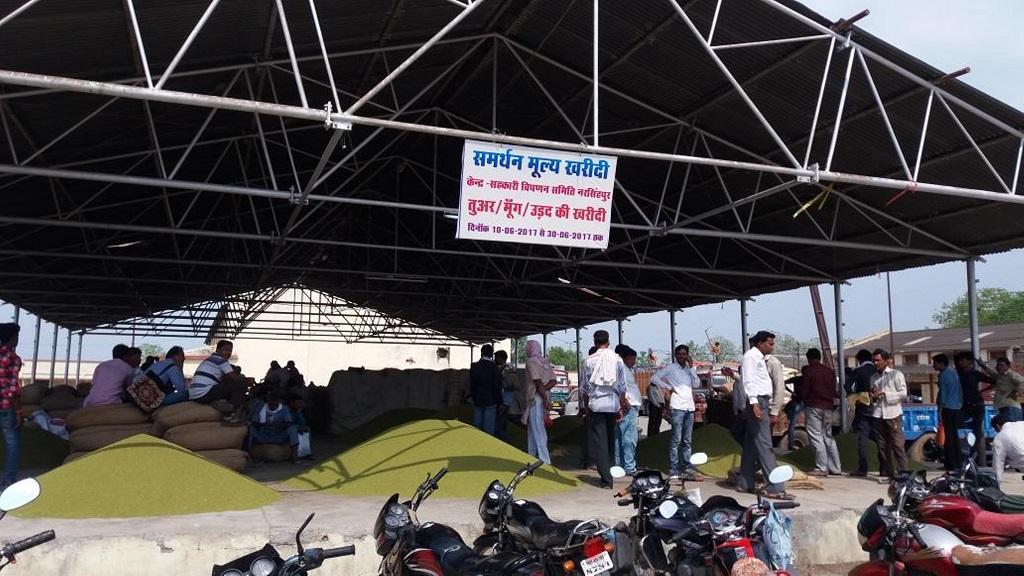 पिछल कई वर्षों से मध्यप्रदेश में मूंग खरीदी समर्थन मूल्य पर होती रही है। फाइल फोटो: मनीष चंद्र मिश्र