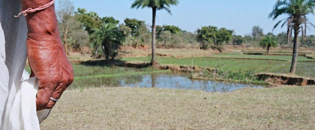 Agroforestry: Professionals need to find solutions to unique problems for each village. Photo: Surya Sen